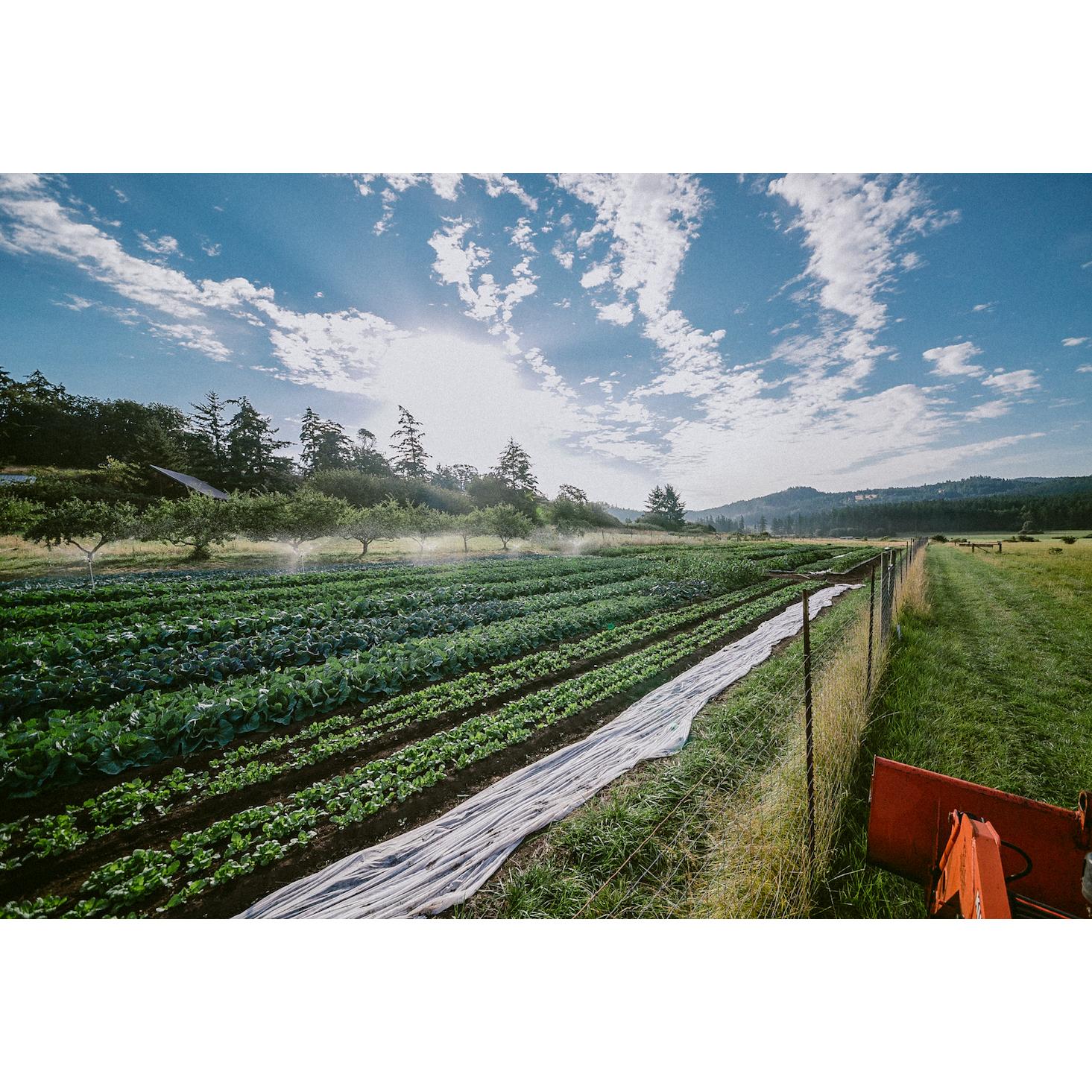 Joon Farm