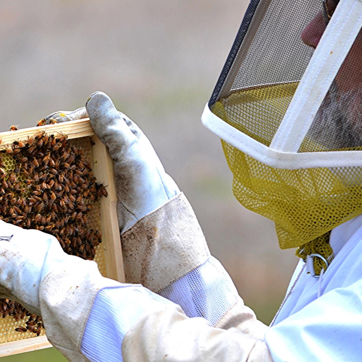 Ona Mission Honey Farm