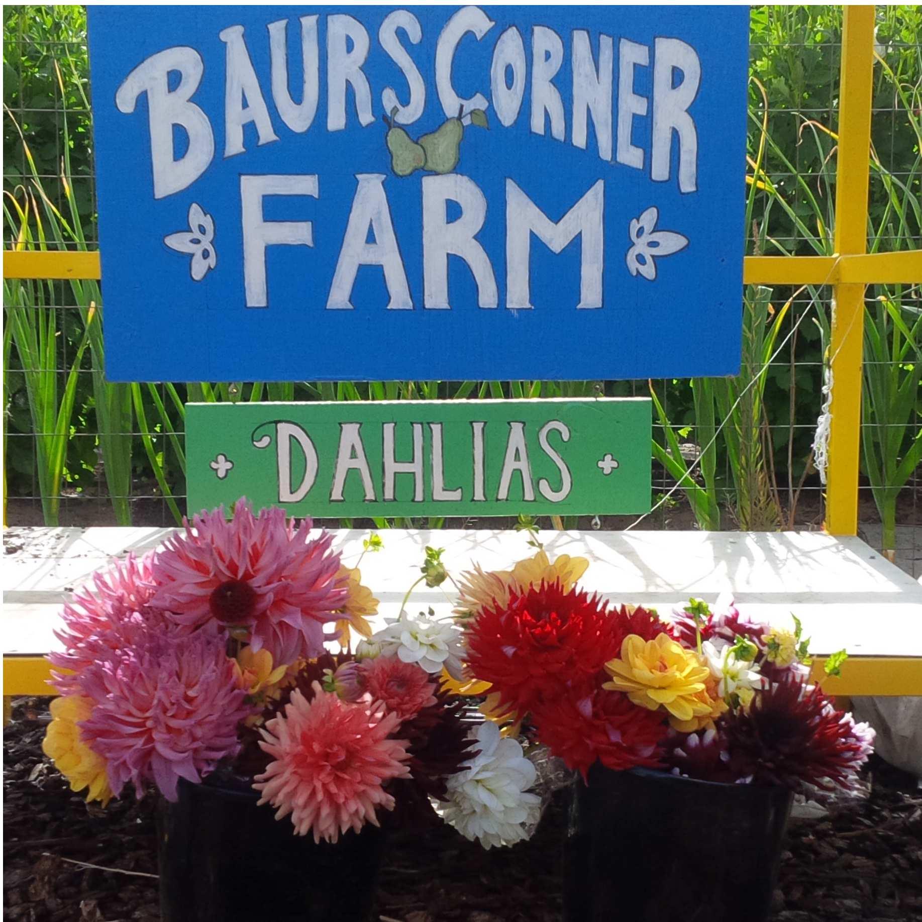 Baurs Corner Farm