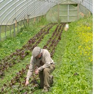 Kildara Farms