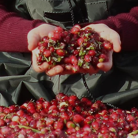 Yellow Point Cranberries