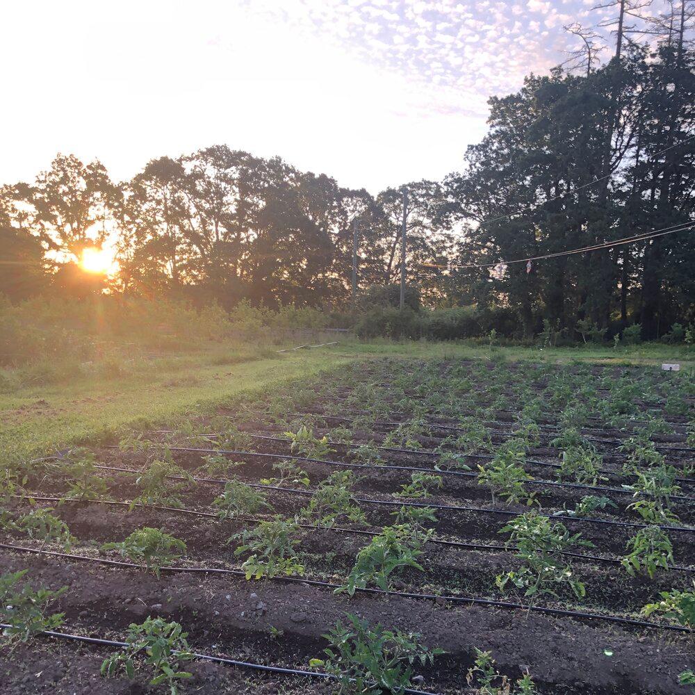 Anneth Farm