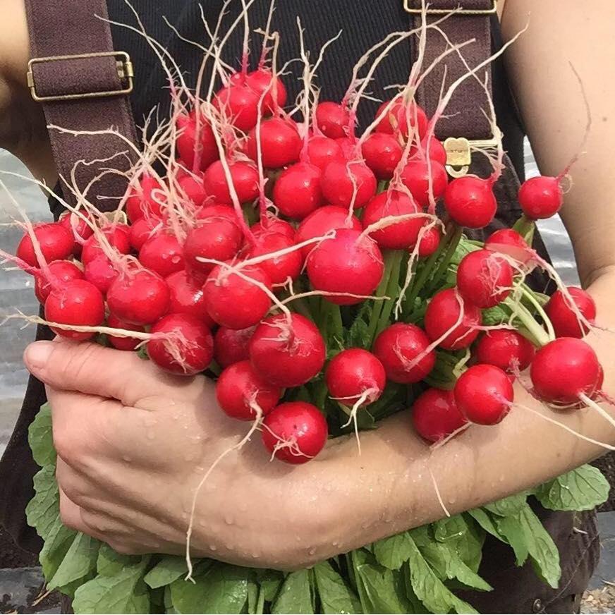 Littlest Acre Organics