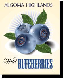 Algoma Highlands Wild Blueberries