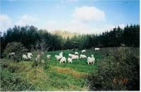 Forrest Farm
