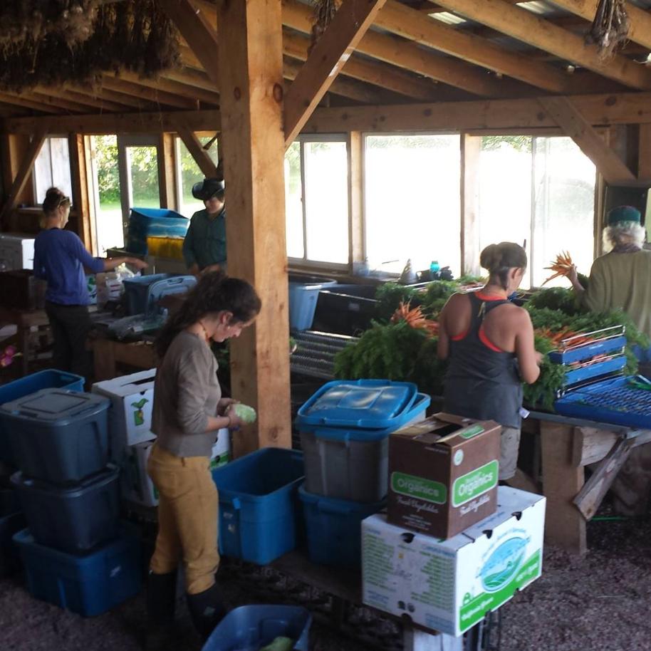 Seeds & Spores Farm