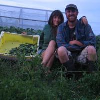 Seed & Scarecrow Farm