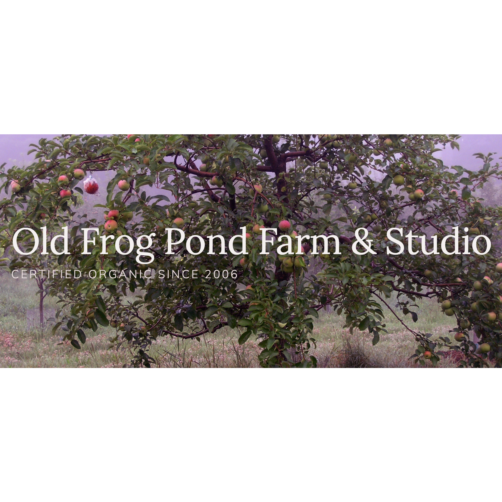 Old Frog Pond Farm & Studio